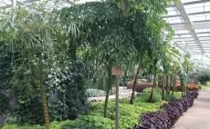北戴河养老院-绿植