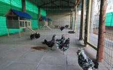 北戴河养老院-生活养殖
